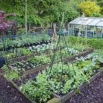 The First Steps to Growing your Own Fruits and Vegetables